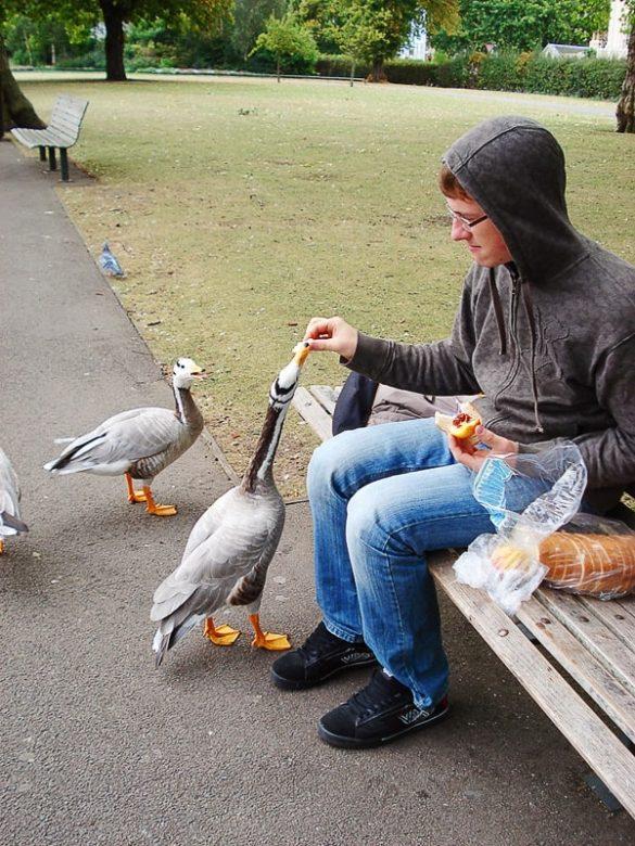 moški hrani gosi, Hyde Park