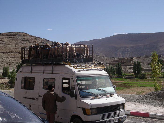 Kombi v Maroku naložen z živimi ovcami