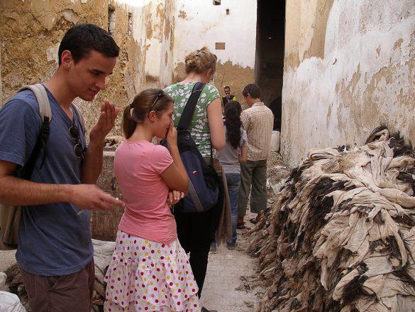 ogled predelave živalskih kož v usnje. Maroko