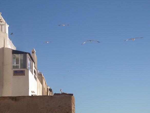 Galebi nad mestom Essaouira