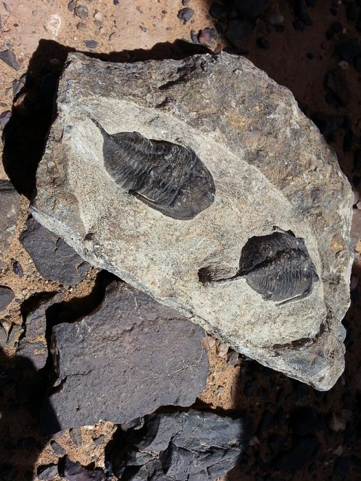 fosili v kamnu