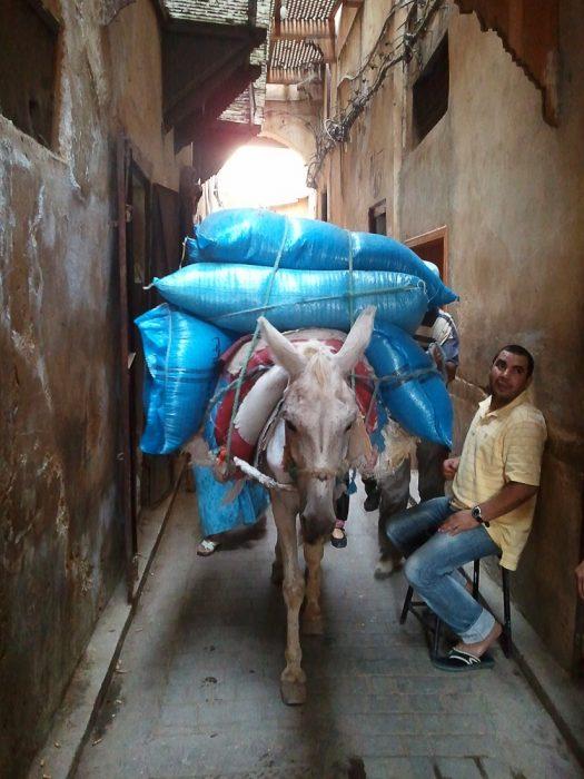 otovorjen osel v mestu Fes, Maroko