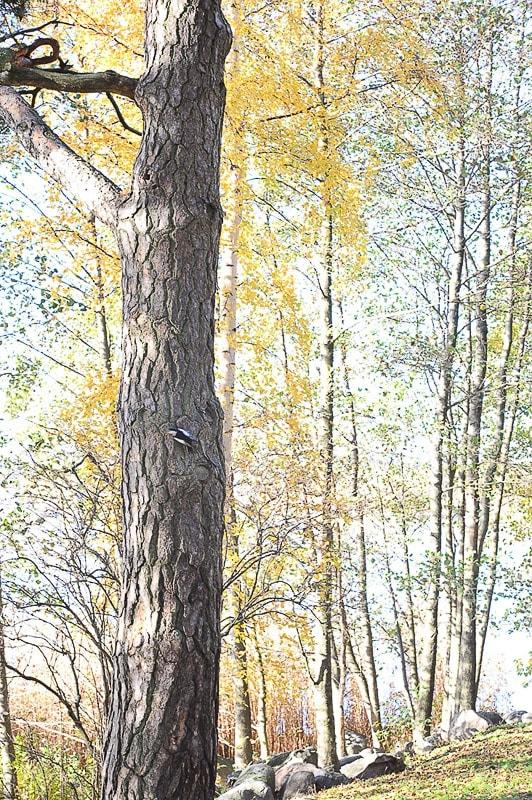 jesenske barve gozda