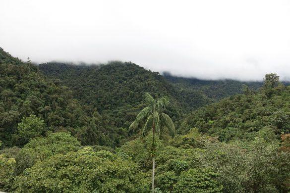 tropski deževni gozd Mindo