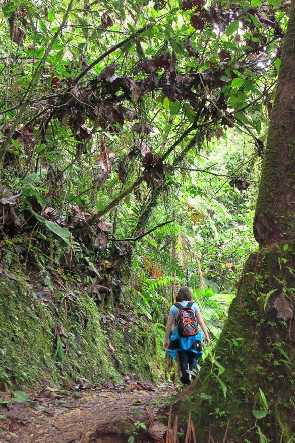Potka skozi deževni gozd Mindo