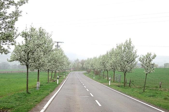 cvetoče drevje ob cesti, Luksemburg
