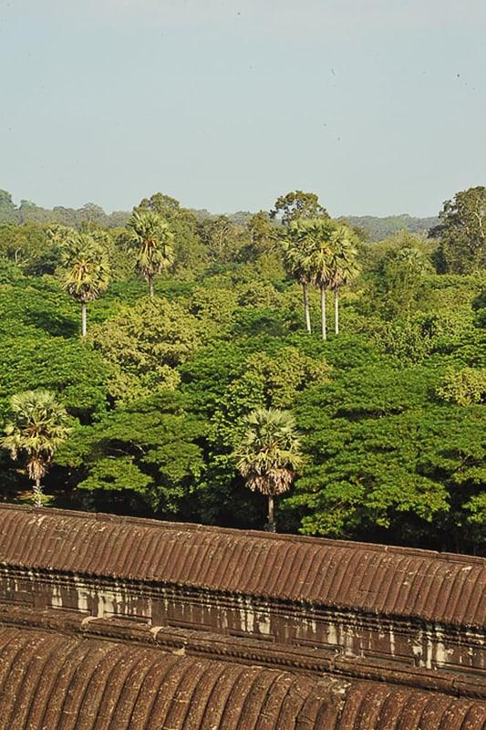 džungla v Kambodži
