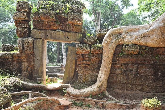 Ta Prohm tempelj, preraščen z džunglo