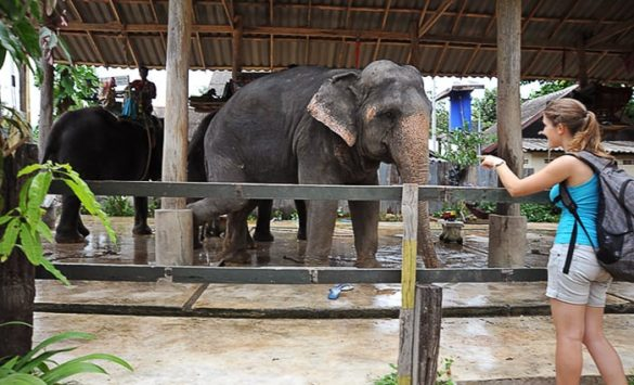 tajski slon