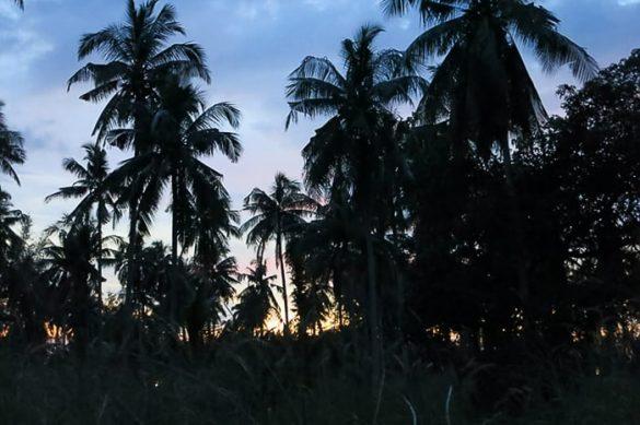 sonce zahaja za palmami na otoku koh chang