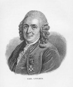 Carl Linnaeus ob koncu 18. stoletja