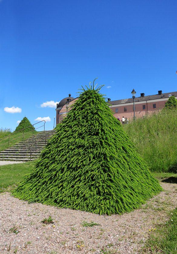 botanični vrt, Uppsala