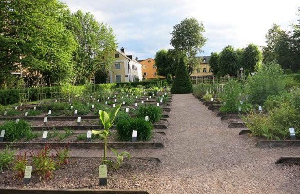 Gredice z enoletnicami, Linnaeusov vrt