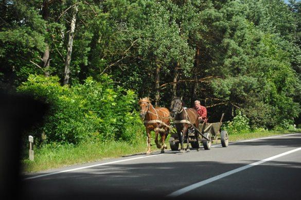 konja vlečeta voz po glavni cesti v Ukrajini