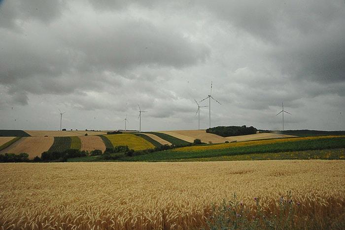 širna polja žitaric, vmes pa veternice