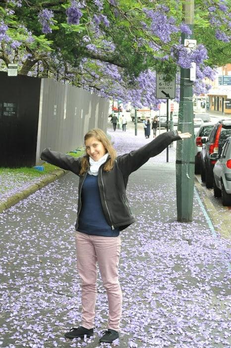 cvetoče drevo Sydney Avstralija