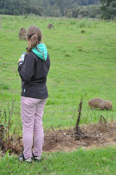 ženska ob ograji, na drugi stran vombat in kenguru