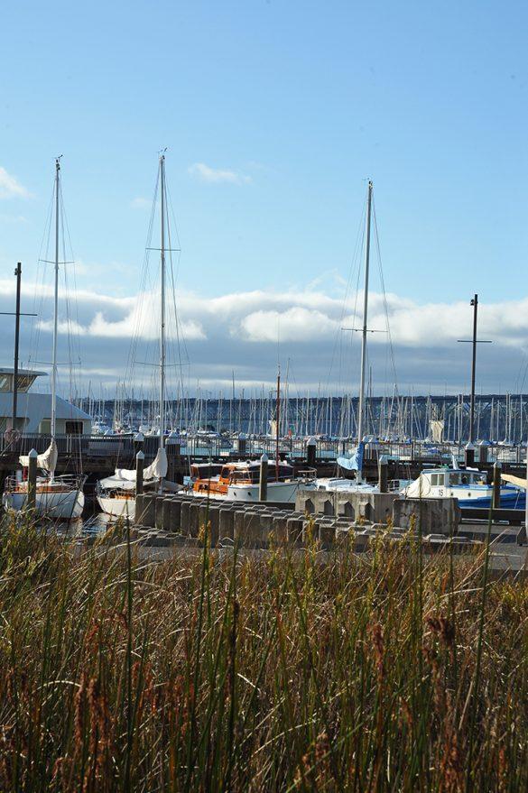 Wynard Quarter marina