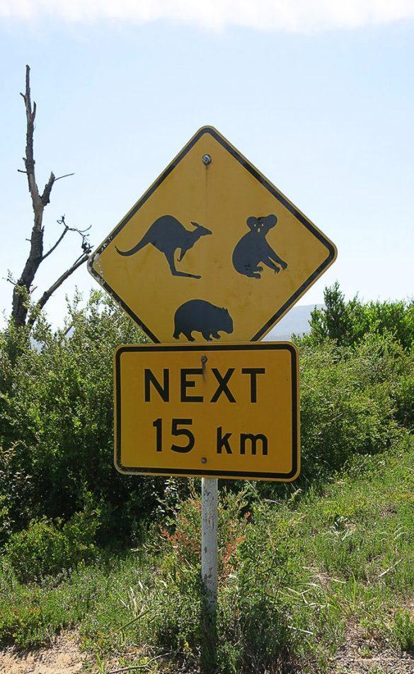 prometni znak za živali avstralija