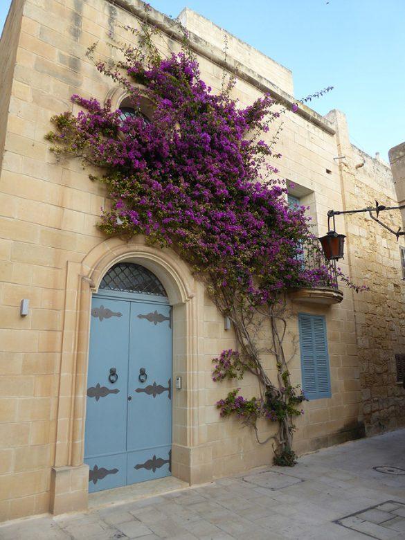 stavba iz peščenjaka z modrimi vrati in vijoličnim grmom na fasadi
