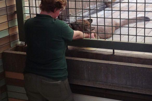 oskrbnica živalskega vrta boža pumo