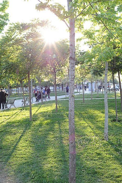 večerno sonce sije med drevesi v parku v tirani