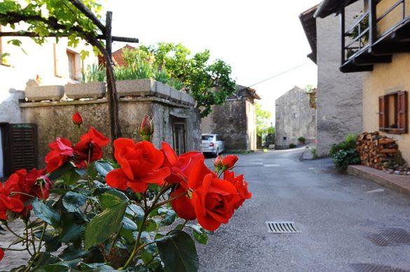 vrtnice in v ozadju ulica vasi Štanjel