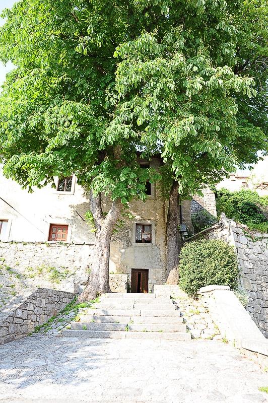 kamnita hiša, pred njo pa veliko košato drevo