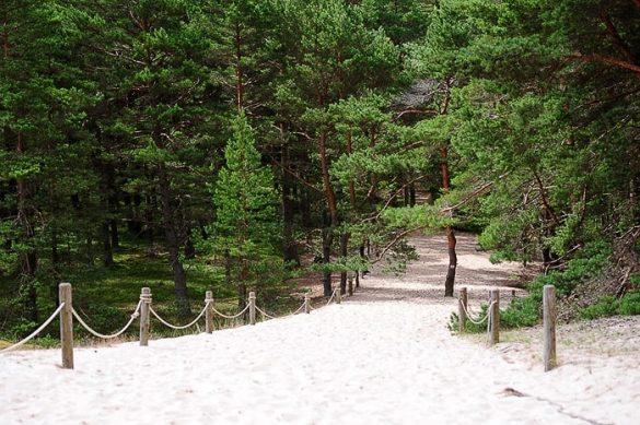 mivkasta pot vodi v gozd