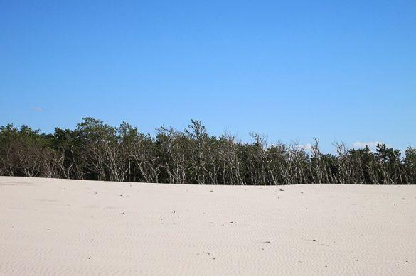 peščena puščava in mrtva, črna drevesa na koncu