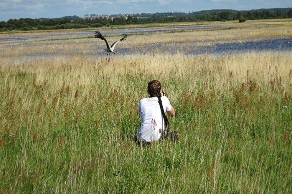 moški v visoki travi fotografira štorkljo