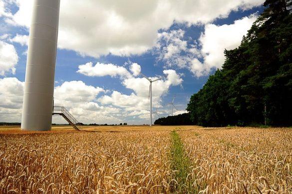 Žitna polja z vetrnicami