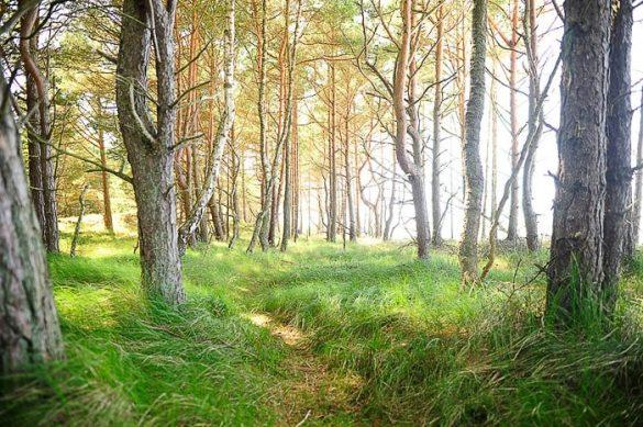 gozdna potka, okoli zelena trava in debla dreves