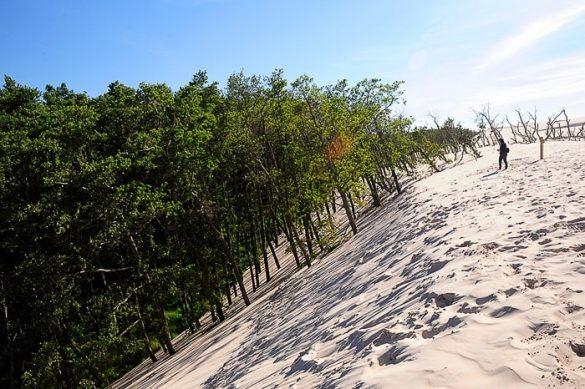 rob ogromne sipine. na pobočju so zelena drevesa
