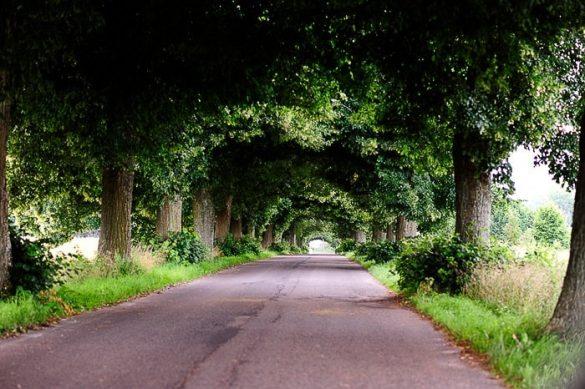 cesta, ki jo obdajajo drevesa tako, da nastane tunel iz krošenj