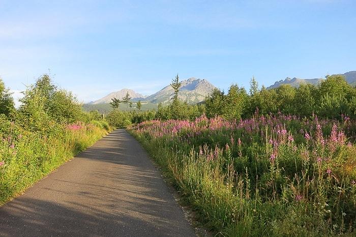 cesta, obdana z gorskimi rožami, v ozadju gora v verigi Visoke Tatre