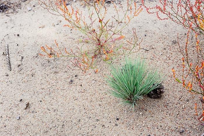 zelen šop trave in oranžne rastline na peščeni podlagi
