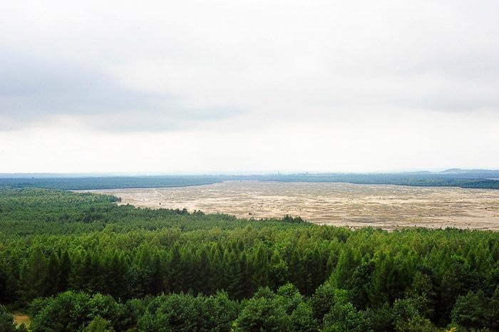 gozd, ki se prevesi v puščavo