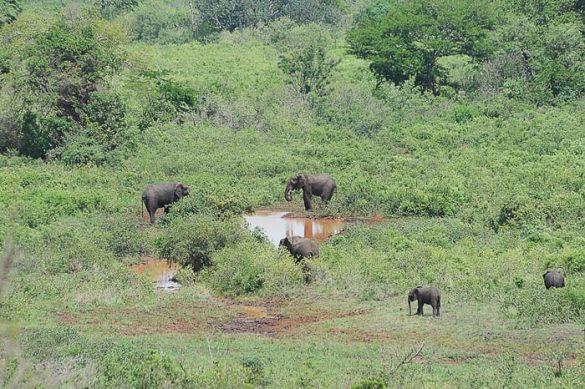 sloni v parku Hluhluwe iMfolozi