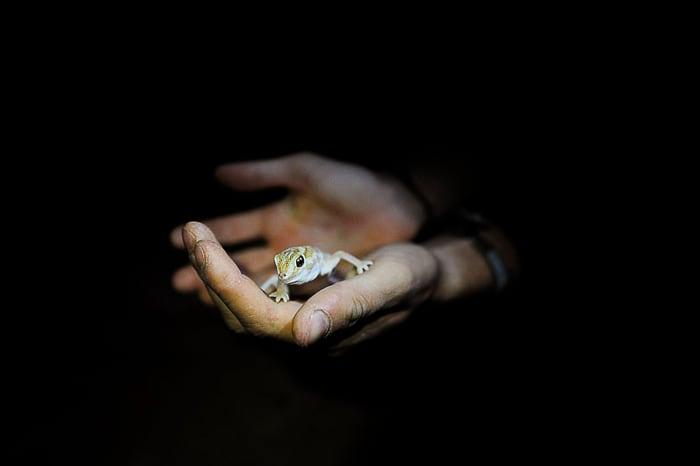 kuščar v dlani