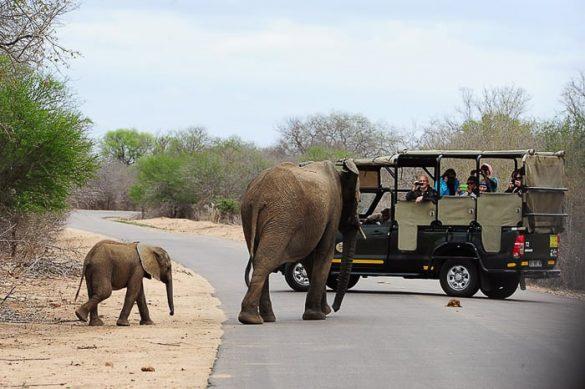 safari jeep in slon