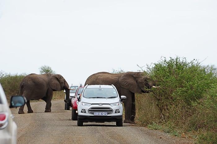 Kruger, slon na cesti