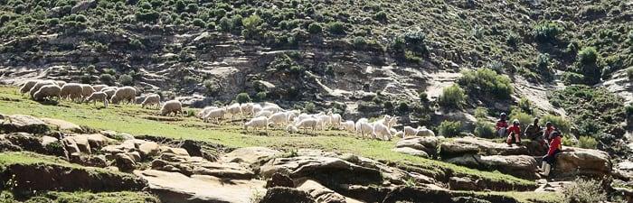 pastir z ovcami, Lesoto