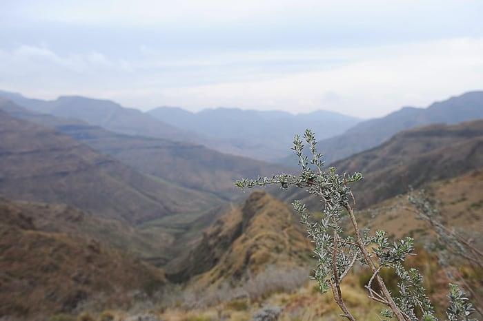 vejica akacije, park Tsehlanyane
