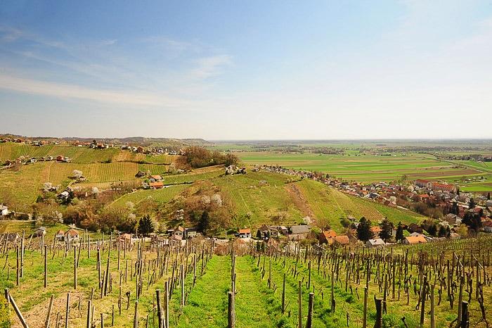 grički preraščeni z vinogradi. Lendavske gorice