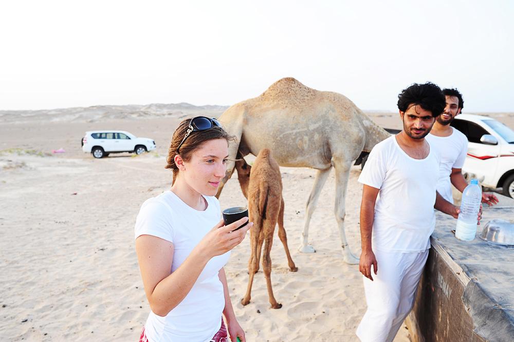 kamelje mleko v bela puščava Al Khaluf Dunes