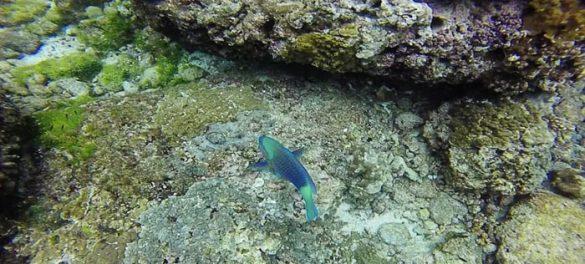 Mavrična ribica