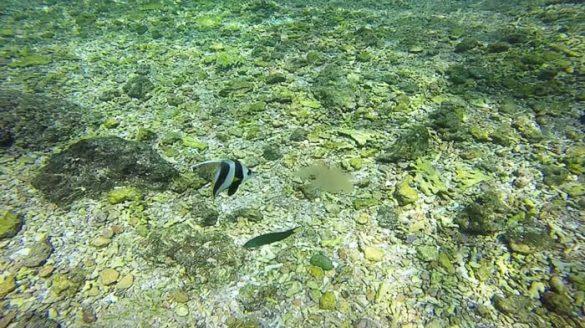 podvodna fotografija ribe, ki je meduzo