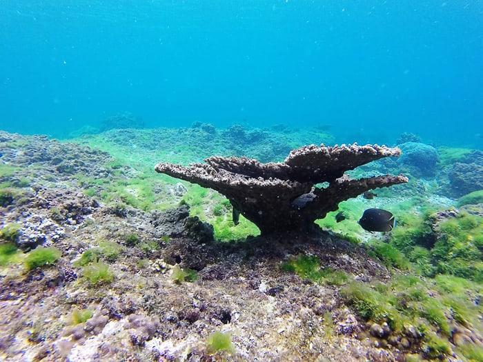 korale, otočje Daymaniat