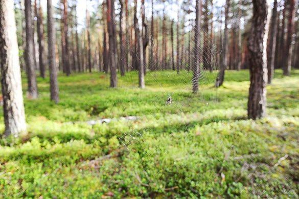 gozd Naliboki
